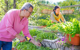 Câu chuyện của hai cô gái 9x về Hà Tĩnh mở trang trại rau quả sạch và giấc mơ sống gần hơn với thiên nhiên