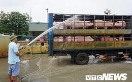 Nguy cơ thiếu 200.000 tấn thịt lợn dịp cuối năm