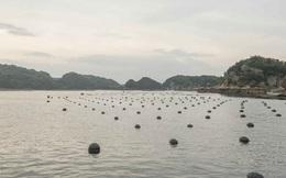 Nghề nuôi trai lấy ngọc siêu tỉ mỉ ở Nhật Bản