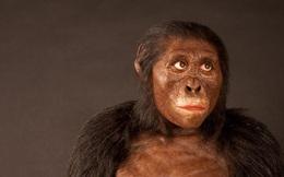 Sau 3 triệu năm, cuối cùng loài vượn hiện đại đã thông minh hơn tổ tiên con người trong quá khứ