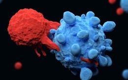Trung Quốc: Kỹ thuật lập trình tế bào gốc giúp tấn công và tiêu diệt ung thư