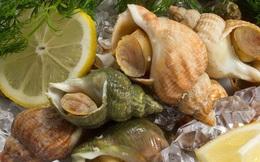 """Ốc Bulot Pháp: Từng chả ai ăn, dùng làm mồi cho cá đến chỗ trở thành thực phẩm đắt cả nửa triệu bạc vẫn """"hết hàng"""""""