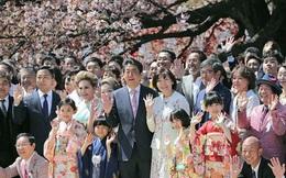 """Tỷ lệ ủng hộ Thủ tướng Nhật Bản sụt giảm vì """"bê bối hoa anh đào"""""""