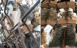 Nở rộ ngành công nghiệp lông mèo tàn bạo tại Trung Quốc khiến hàng trăm nghìn người yêu động vật thế giới xót xa