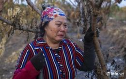 Hưng Yên: Người dân xót xa khi nhiều vườn cây ăn quả bị kẻ gian đốt trộm