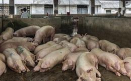 """Chuyện như đùa ở TQ: Lợn bị """"không kích"""" vì tăng giá gấp đôi, nông dân trả đũa, máy bay vạ lây"""