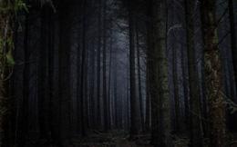 Thuyết 'Khu rừng đen tối' và tại sao chúng ta vẫn chưa tìm thấy người ngoài hành tinh