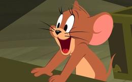Năm Canh Tý nói chuyện chuột: Những sự thật thú vị về loài chuột