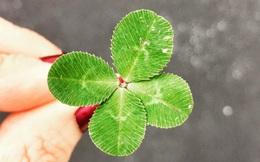 Có 5 kiểu người rất kỳ lạ: Luôn luôn gặp được may mắn trong cuộc sống, bạn có ở trong số đó?