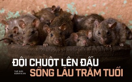 """""""Đội chuột lên đầu, sống lâu trăm tuổi"""": Nơi """"cụ Tí"""" được con người yêu thương nhất Trái đất, ngày nào cũng ăn uống thoải mái chẳng sợ bất kỳ điều gì"""
