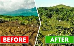 """ĐH Princeton mở """"deal"""" hot cho công ty hoa quả đổ rác thoải mái trên cánh rừng chết, 15 năm sau đem lại kết quả khiến ai cũng ngỡ ngàng"""