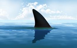 Vây Cá Mập: Từ bàn ăn của giới quý tộc cho đến sự tuyệt chủng của một giống loài