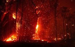 Nguy cơ cháy rừng dữ dội trở lại, Australia ban hành cảnh báo và thông báo sơ tán mới