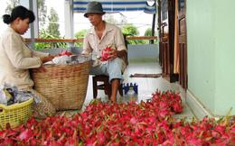 Đại dịch Corona đang khiến ngành nông sản Việt gặp khó, nông dân và đầu nậu làm thanh long, sầu riêng và mít tìm hướng ra