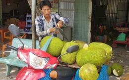 Nông sản miền Tây rớt giá thê thảm