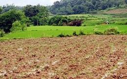 HoREA: Tách thửa với đất nông nghiệp, đất lâm nghiệp, đất phi nông nghiệp… dễ dẫn đến tình trạng đầu nậu, bán nền tràn lan