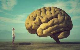 Hiểu được 5 quy luật đơn giản của não, người thông tuệ sẽ biết biến khó khăn thành kết quả xứng đáng