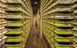 Nông nghiệp trong tương lai: Không cần đến đất và mặt trời, tiết kiệm 95% nước, 40% phân bón và không sử dụng thuốc trừ sâu