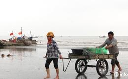 Trúng đậm mùa ruốc biển, ngư dân xứ Nghệ kiếm tiền triệu mỗi ngày