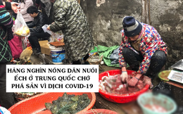 Hàng nghìn nông dân nuôi ếch ở Trung Quốc chờ phá sản vì dịch Covid-19, cầu cứu nhà chức trách cho phép tiếp tục chăn nuôi