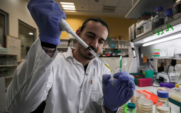 WHO: Đang thử nghiệm hơn 20 loại vắc-xin khác nhau cho virus corona