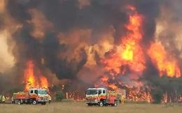 Cháy rừng liên miên khiến loài chim ở Úc bắt chước kêu ò í e như xe cứu hỏa
