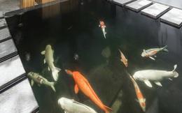 Hồ cá Koi ở Hà Nội trên báo Mỹ
