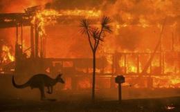 Cháy rừng ở Australia: Gần nửa tỉ động vật hoang dã bị thiêu cháy