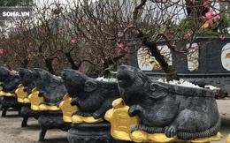 Chuột đen cưỡi vàng cõng hoa đào giá 2 triệu đồng hút khách dịp Tết 2020