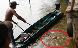 """Cá chép thả đưa ông Táo """"về trời"""" chưa kịp bơi đã bất tỉnh vì bị chích điện"""