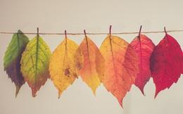 12 tháng và 12 định nghĩa đã thay đổi cuộc sống của tôi: Cách làm đúng tạo ra giá trị bất ngờ