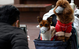 Chuyên gia khẳng định thú cưng không thể nhiễm Covid-19, vậy lý do một chú chó ở Hồng Kông dương tính với virus là gì?