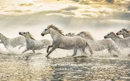 Lao đầu đi tìm ngựa quý, chàng trai nhận được lời khuyên bất ngờ của vị cao niên, hội công sở nịnh nọt nghe xong cũng tỉnh ngộ