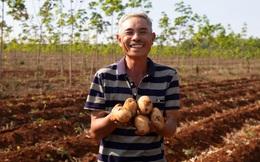 PepsiCo Việt Nam cùng Gia Lai tìm hướng đi mới cho nông nghiệp bằng cây khoai tây
