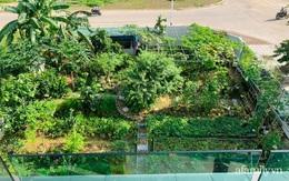Nông trại rộng 300m² đẹp như cổ tích với đủ loại hoa và rau quả của mẹ 4 con ở Móng Cái, Quảng Ninh