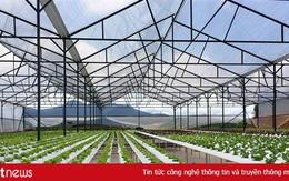 Đà Nẵng ưu đãi đầu tư nông nghiệp công nghệ cao