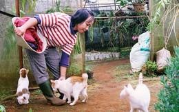Cô thạc sĩ Sài Gòn bỏ phố lên rừng, trồng hoa và sống trong ngôi nhà nhỏ với 5 chú mèo ở Đà Lạt