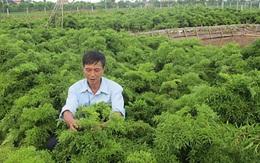 Xuất phát điểm từ 10 tỷ đồng, công ty này đã dựa vào cây thuốc cổ truyền như đinh lăng, đắng đất, xây dựng nên doanh nghiệp trị giá hơn 200 triệu USD