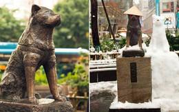 Câu chuyện cảm động về chú chó hơn 9 năm đợi người chủ quá cố ở sân ga rồi ra đi trong niềm tiếc thương của cả nước Nhật