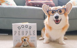 """Chào năm Chó, hãy tìm hiểu những sự thật cực bất ngờ về giống loài """"bạn thân"""" của con người này"""