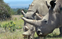 Những sinh vật sắp tuyệt chủng trong thập niên 2020 sẽ ảnh hưởng tới chính sự sinh tồn của loài người