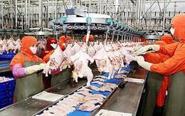 """Ngành chăn nuôi bị nước ngoài """"nuốt chửng""""?"""