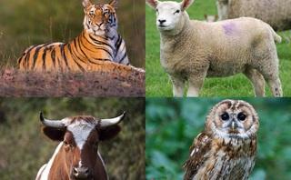 Bò đực vs Chim cú vs Cừu non vs Hổ: Khách hàng của bạn thuộc nhóm tính cách nào?