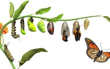 Năng lực quan trọng với cái mới là khả năng bỏ đi cái cũ, con sâu có phá kén mới có thể hóa bướm bay cao