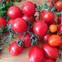 """5 thực phẩm bình dân của VN được TQ gọi là """"mỹ thực"""": Bệnh nhân ung thư cũng nên ăn nhiều"""