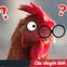 """Case study kinh điển ở Harvard: """"Gã điên"""" đốt tiền tấn để nghiên cứu làm kính áp tròng cho… gà, cung ứng cho hầu hết trại gà lớn khắp nước Mỹ và trở thành triệu phú đô la"""
