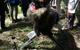 Đây là robot Quái vật Sói tại Nhật, mang trong mình linh hồn của loài sói Hokkaido đã bị tuyệt chủng xưa kia