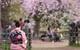 Người Nhật chuyển từ ăn tết Âm sang tết Dương và sự tiếc nuối của vị đại sứ Nhật